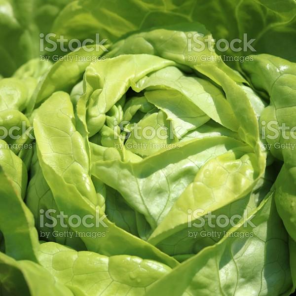 Kopfsalat Bio
