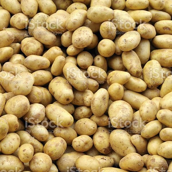Kartoffeln Bio